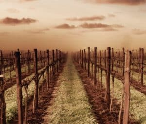 coonawarra-vineyard